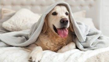 床單和枕頭套多久洗一次?